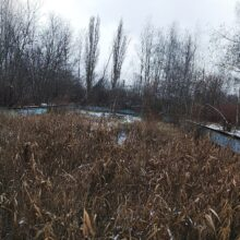 Opuszczony basen Liga Chorzów